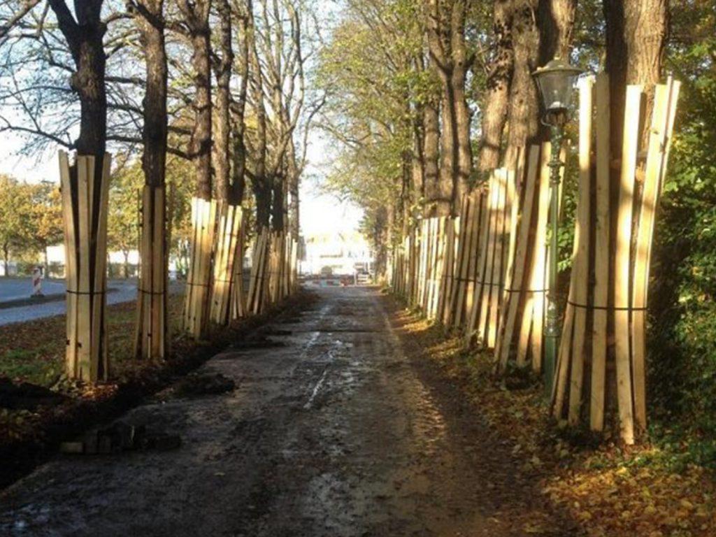 boombescherming ouwejan & f. de bruijn zegveld